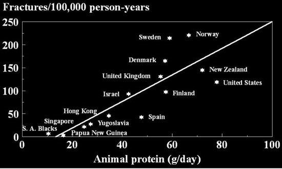 שברי ירך ביחס לצריכת חלבון מהחי